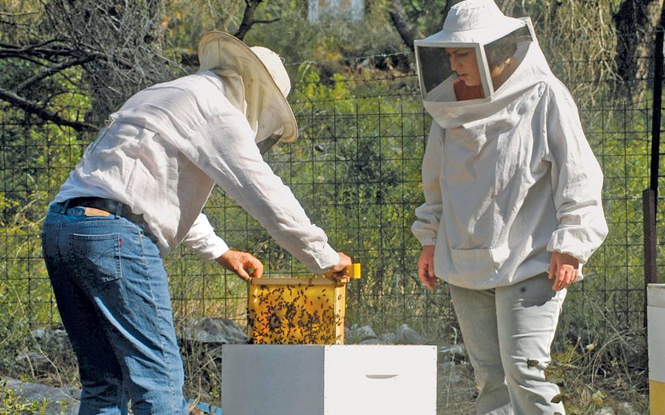 Γλυκό αντιβιοτικό το μέλι από τον Ολυμπο