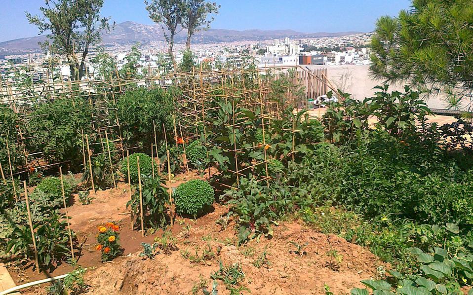 «Για τη φάρμα, πάρτε το ασανσέρ». Στην ταράτσα πολυκατοικίας στην περιοχή Αμπελοκήπων, ένας λαχανόκηπος, δένδρα, αρωματικά φυτά, κότες, κουνέλια, συνθέτουν μια πρωτοποριακή εικόνα αστικής οικολογίας, και ο εμπνευστής της δίνει καθημερινώς δείγματα αγροτικής γραφής μέσα στον θόρυβο της πόλης.
