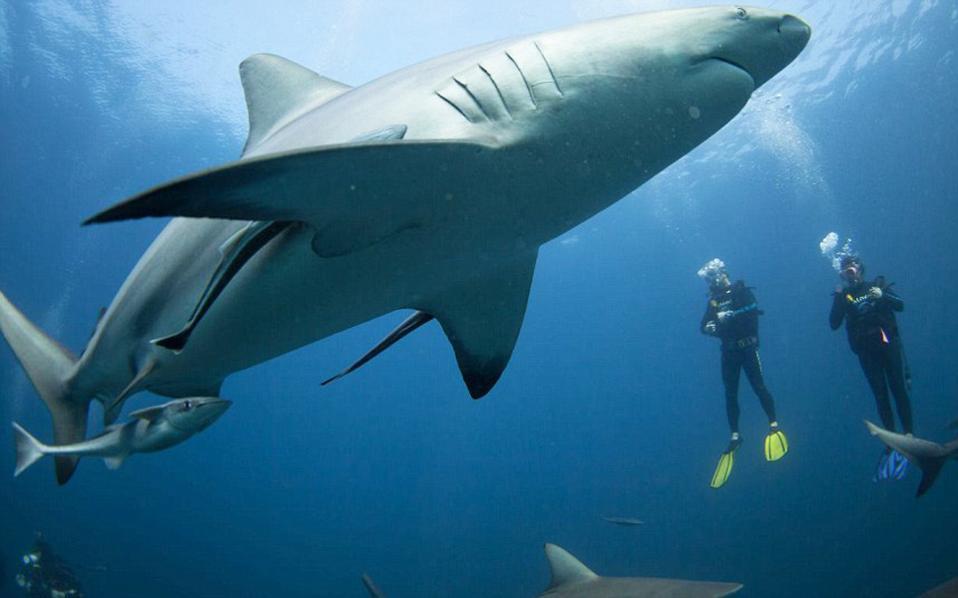 Έκκληση επιστημόνων για να μην θανατώνονται καρχαρίες