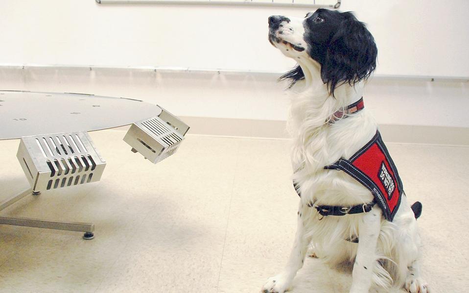 Ο σκύλος αντιλαμβάνεται τις χημικές ουσίες που εκκρίνονται όταν υπάρχει καρκίνος. Κάτι που χρωστάει στην εξαιρετικά ευαίσθητη μύτη του, η οποία διαθέτει 220 εκατ. οσφρητικούς υποδοχείς, έναντι μόλις 50 εκατ. της ανθρώπινης όσφρησης.