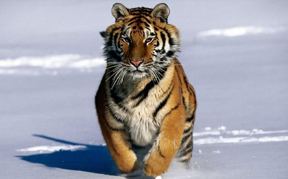 52% λιγότερα τα είδη ζώων στον πλανήτη από το 1970