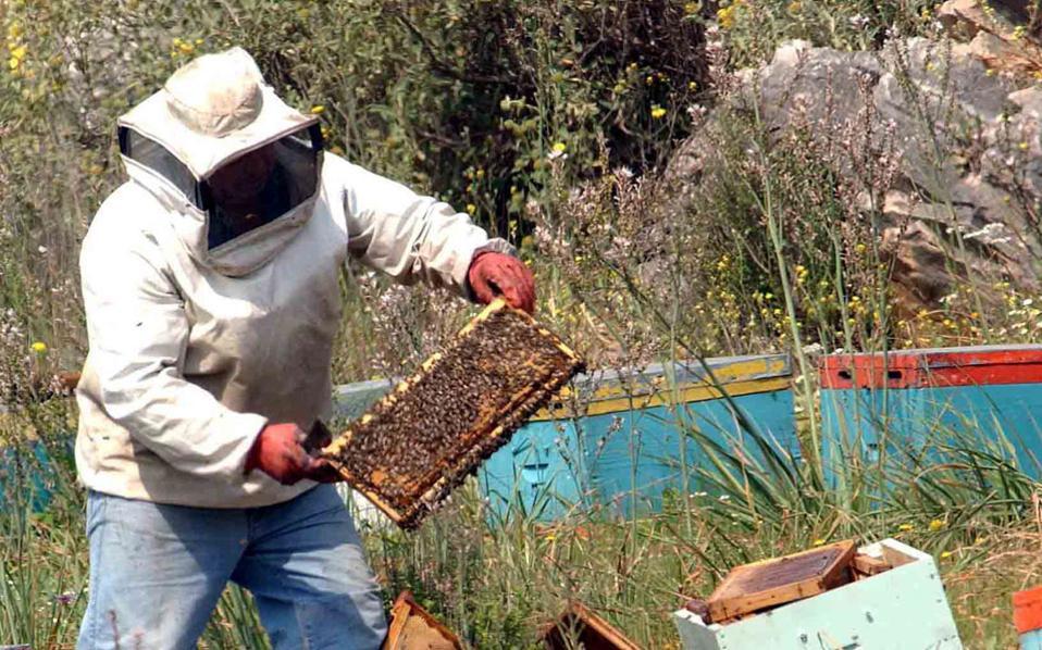 «Η μέλισσα είναι κρίσιμος κρίκος στη γονιμοποίηση των φυτών. Εάν καταστρέψουμε τις μέλισσες, δεν θα υπάρχει επικονίαση», υπογραμμίζει ο πρόεδρος του συλλόγου «Αττική Μελισσοκομία», Γιάννης Ψάρρας.