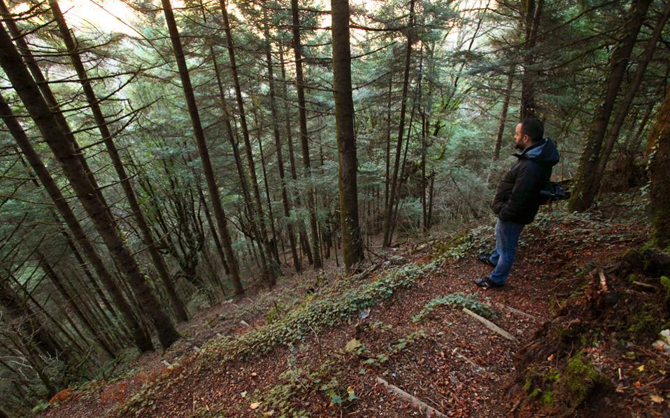Μέσα στο δάσος του Τόρνου, στο μονοπάτι για το μικρό Πανταβρέχι. (Φωτογραφία: ΟΛΓΑ ΧΑΡΑΜΗ)
