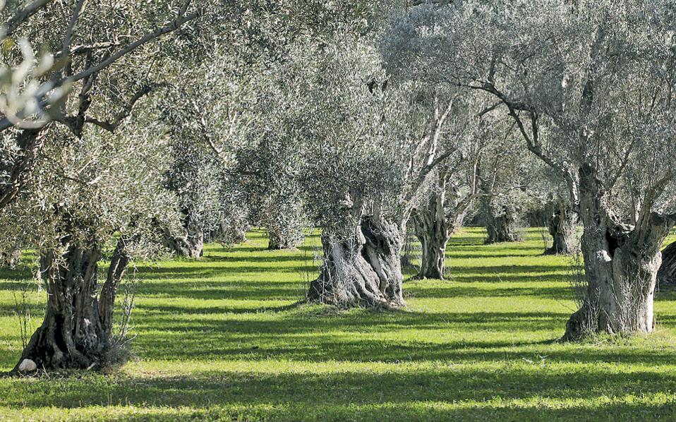 Οι καλλιέργειες στη λεκάνη της Μεσογείου θα πληγούν σφοδρότατα από την κλιματική αλλαγή, ενώ το 2050 η Ελλάδα θα είναι η τρίτη μεταξύ 155 χωρών σε αριθμό κατά κεφαλήν θανάτων από την κλιματική αλλαγή, όπως υποστήριξε μελέτη του Προγράμματος για το Μέλλον του Επισιτισμού του Πανεπιστημίου της Οξφόρδης.