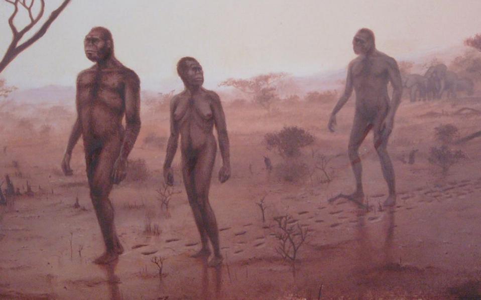 Ολοι ή κάποιοι από τους αυστραλοπίθηκους είχαν την ικανότητα επιβίωσης, αναπαραγωγής και καλύτερης προσαρμογής συγκριτικά με άλλα είδη που δεν είχαν αναπτύξει τον ίδιο βηματισμό.