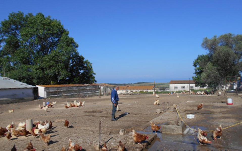 Στις φυλακές Κασσάνδρας Χαλκιδικής οι έγκλειστοι είναι γεωργοί και κτηνοτρόφοι.