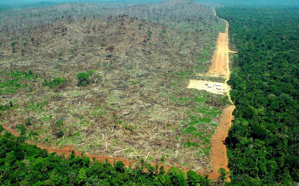 Στην Παρά της Βραζιλίας η αποψίλωση φτάνει το 45%-61%.
