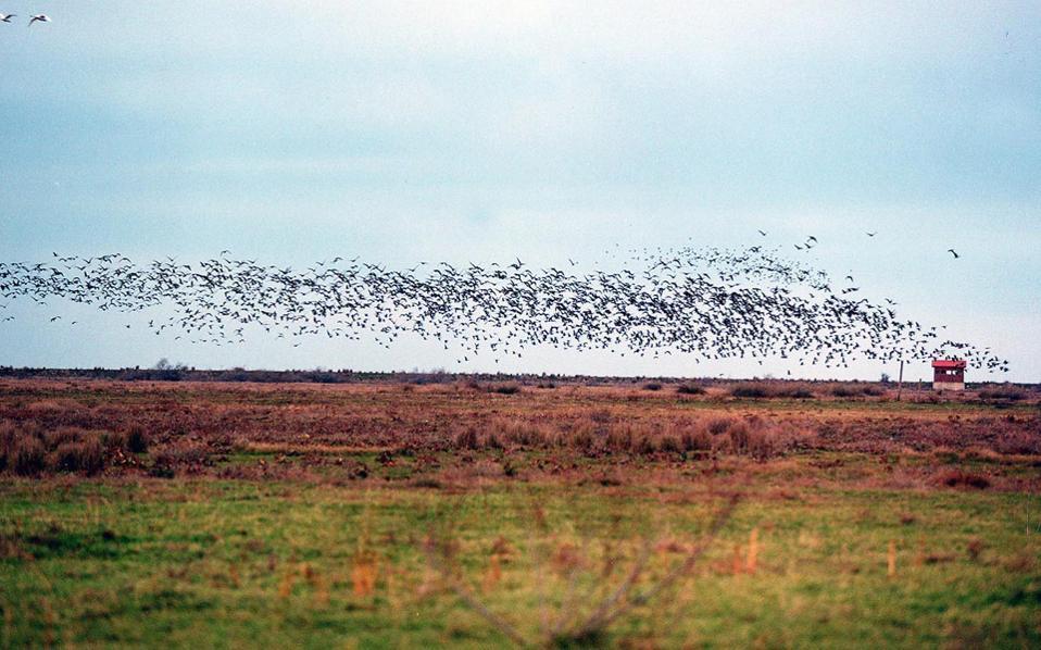 Τους θερινούς μήνες δεν υπάρχουν σμήνη πτηνών στο Δέλτα του Εβρου. Τα περισσότερα εμφανίζονται άνοιξη και φθινόπωρο.