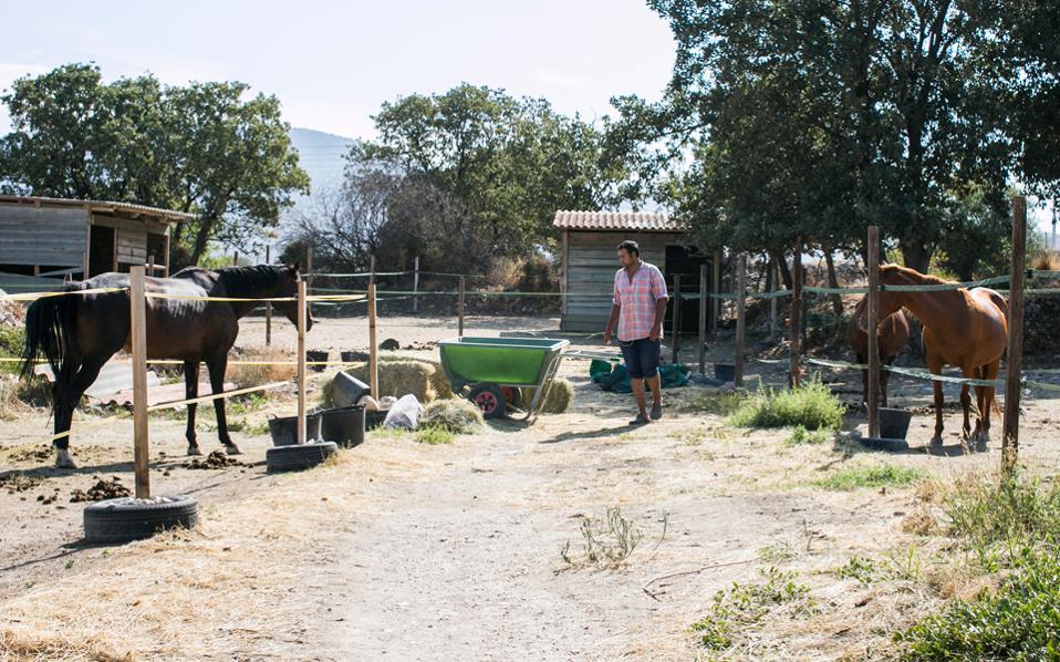Ο Ντέιβ, ο σταβλίτης του ΕΣΠΙ που σκοπό έχει να προστατεύει και να περιθάλπει ιπποειδή από την κακομεταχείριση, την εγκατάλειψη και τον βασανισμό, είναι ο άνθρωπος που φροντίζει καθημερινά τα άλογα του συλλόγου.