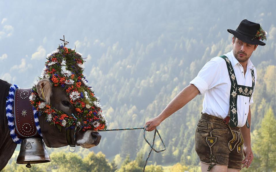 Φρέσκο χορτάρι τέλος. Με τους βοσκούς να φοράνε δερμάτινα σορτς και τις αγελάδες να στολίζονται με λουλούδια, οι κάτοικοι στην Νότια Γερμανία γιορτάζουν το Almadtrieb. Στην διάρκεια της γιορτής, τα κοπάδια των αγελάδων φεύγουν από τα αλπικά λιβάδια και μεταφέρονται στους στάβλους της κοιλάδας.  AFP / CHRISTOF STACHE