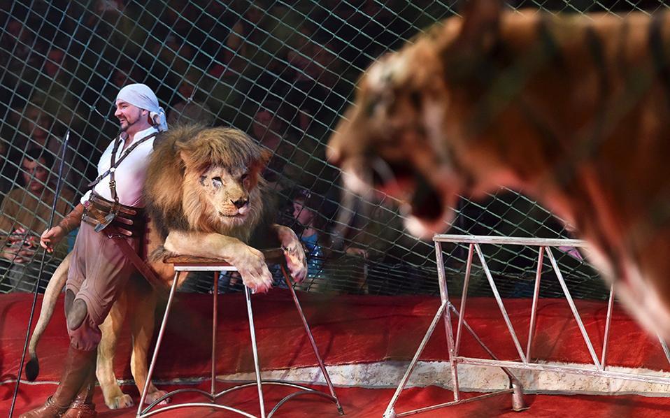 Γατάκια. Αν και τα περισσότερα τσίρκα του κόσμου δεν χρησιμοποιούν ζώα πια για τις παραστάσεις τους, το Ukranian National Circus δίνει μια γεύση στο κοινό από το νέο σόου με τίτλο Extreme Arena, όπου συμμετέχουν, ανάμεσα σε άλλα, λιοντάρια σε ρόλους γάτας και φιλήσυχοι κροκόδειλοι. AFP / SERGEI SUPINSKY