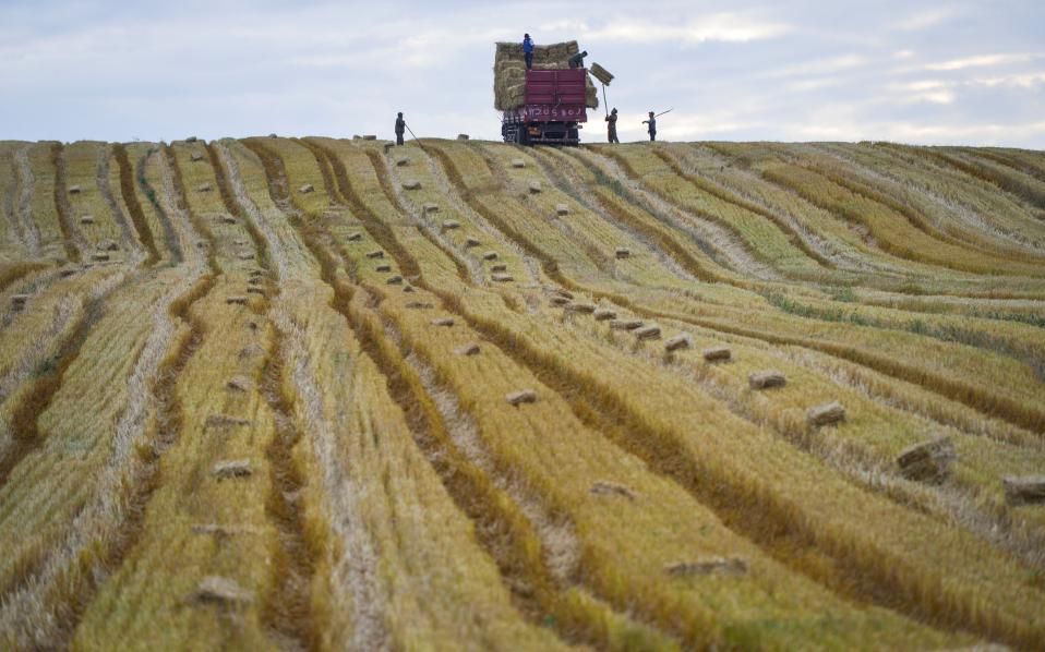 Σημερινός Vincent van Gogh. Όταν η φύση αντιγράφει τους πίνακες, μοιάζει κάπως έτσι. Στην φωτογραφία εργάτες δουλεύουν σε καλλιέργεια στο  Yili της επαρχίας  Xinjiang Uyghur της Κίνας. China Daily/via REUTERS