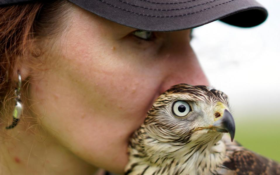 Γερακίσια μάτια. Τόσο το νεαρό γεράκι όσο και η εκπαιδεύτριά του Nika Ryzhova-Alenicheva έχουν όλη την προσοχή τους για να εντοπίσουν μικρά πουλιά. Και οι δυο τους είναι στην υπηρεσία του αεροδρομίου  Domodedovo έξω από την Μόσχα.  REUTERS/Maxim Zmeyev