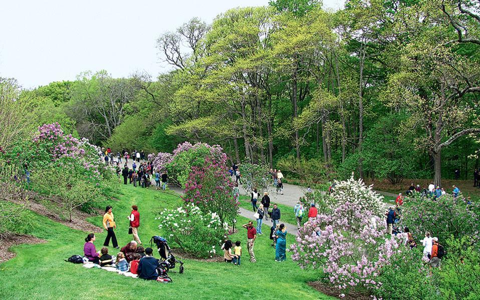 Ανάσες χαλάρωσης για τους επισκέπτες του δενδροκομείου Arnold Arboretum.