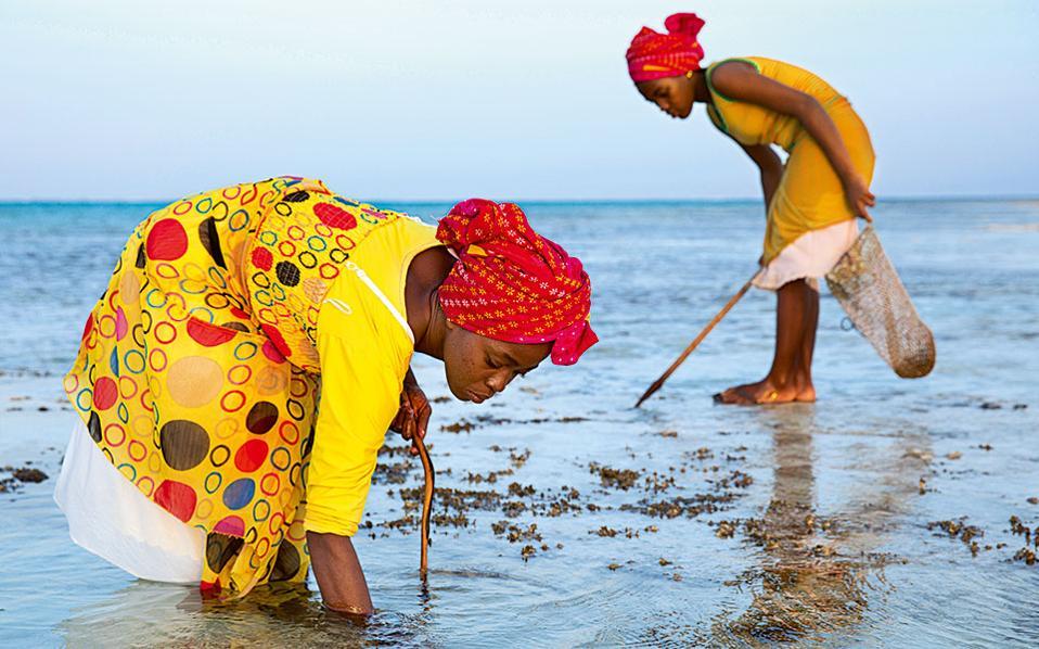 Γυναίκες της Ζανζιβάρης ψαρεύουν οστρακοειδή, με τα οποία προμηθεύουν εστιατόρια της περιοχής.