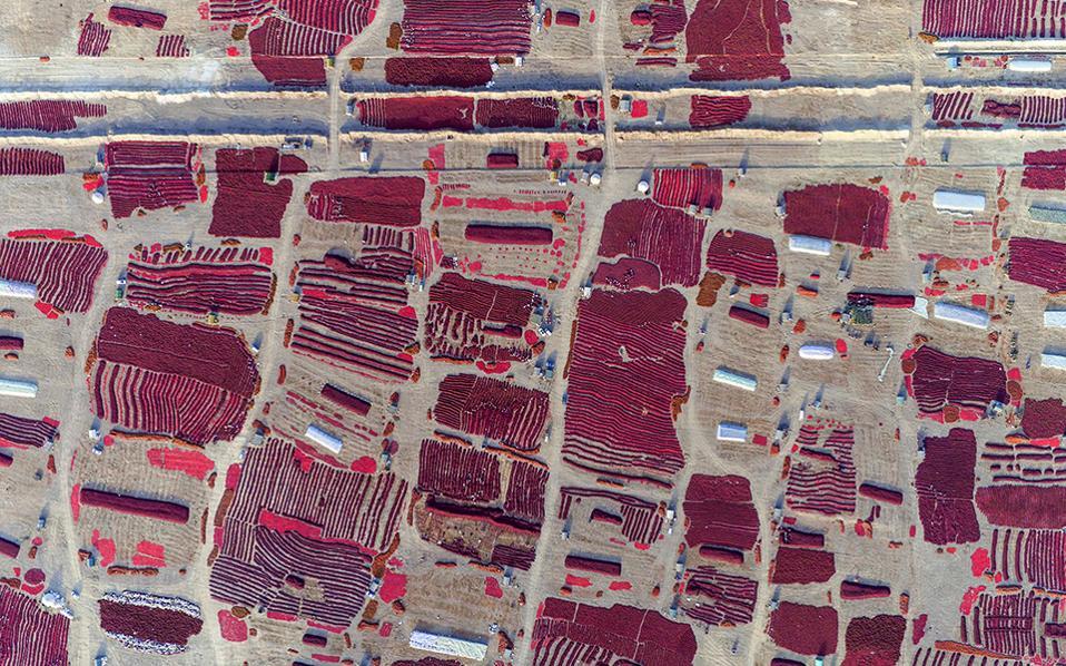 Καμβάς. Ποιος θα το φανταζόταν ότι όλα αυτά τα κόκκινα χρώματα πάνω στην γη προέρχονται από μικροσκοπικές καυτερές πιπεριές; Και όμως, είναι η παραγωγή της Bayingolin στην Μογγολία, που περιμένει να στεγνώσει στον ήλιο για να πουληθεί στην συνέχεια. China Daily/via REUTERS