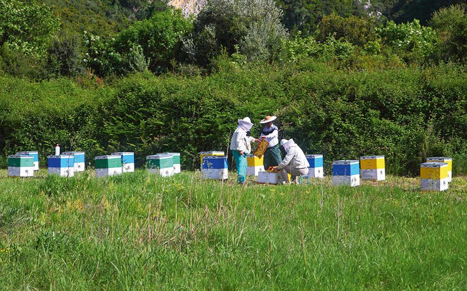 Με τόσα βότανα και λουλούδια, η μελισσοκομία είναι δημοφιλής ενασχόληση των κατοίκων της περιοχής. (Φωτογραφία: ΟΛΓΑ ΧΑΡΑΜΗ)