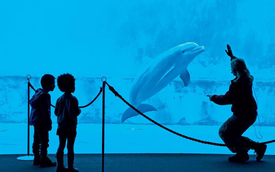 Τα δελφίνια του Ενυδρείου συγκεντρώνουν το ενδιαφέρον μικρών και μεγάλων. (Φωτογραφία: Shutterstock)