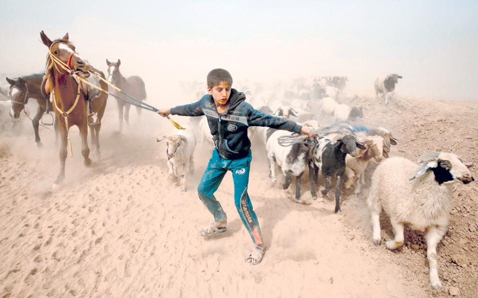 Νεαρός Ιρακινός αναζητεί ασφαλές καταφύγιο για τον ίδιο και τα ζωντανά του, έχοντας διαφύγει από το χωριό Αμπού Τζαρμπόα, που ελέγχεται από τους τζιχαντιστές του Ι.Κ.
