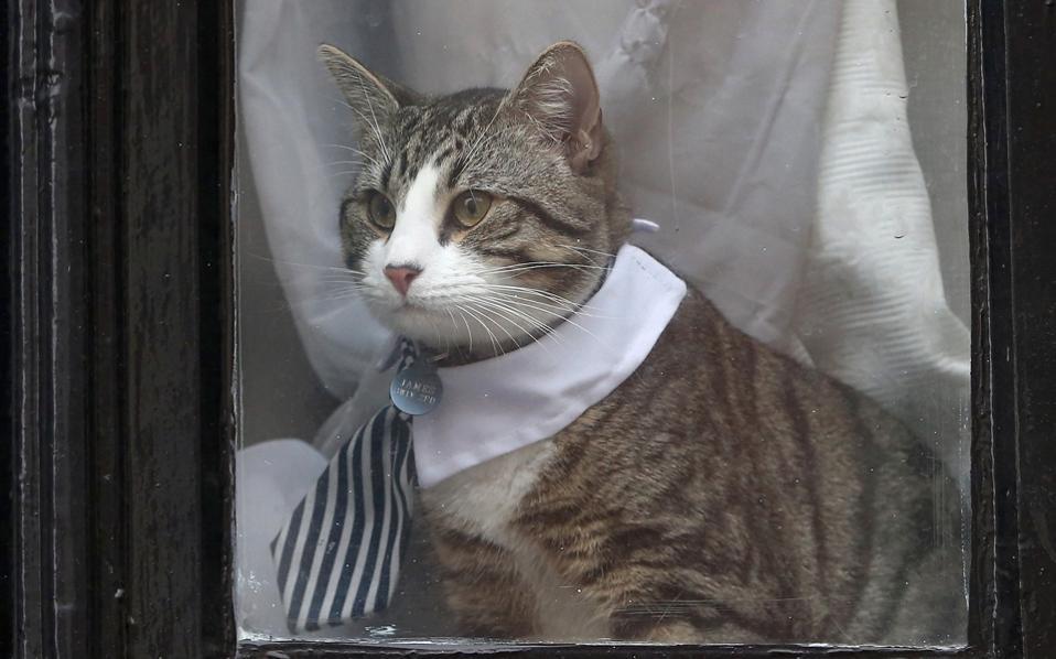 Η γάτα του Τζούλιαν Ασάντζ στο παράθυρο της πρεσβείας του Ισημερινού.