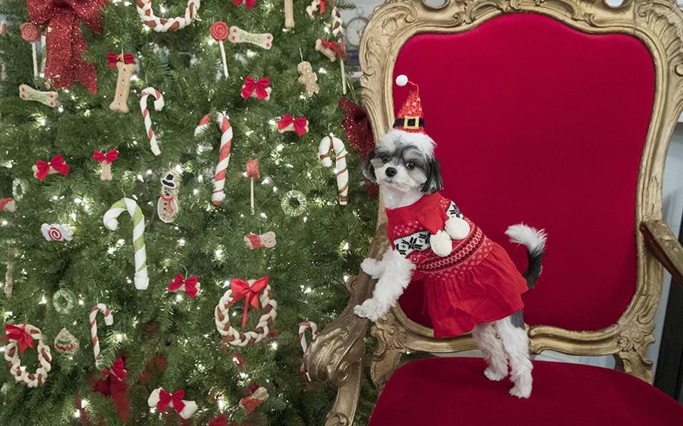 Κατάλογος δώρων. Είναι η νέα, πολλά υποσχόμενη και επικερδής αγορά. Αυτή των ιδιοκτητών κατοικιδίων. Σύμφωνα με μελέτες, τουλάχιστον το 50 τοις εκατό αυτών, αγοράζουν για τους «φίλους» τους δωράκια για τα Χριστούγεννα. Έτσι οι έμποροι είναι έτοιμοι και παρουσιάζουν τον Tinkerbelle να φορά ένα πουλόβερ Martha Stewart Pets και ασορτί καπελάκι. Καλές αγορές! (AP Photo/Mary Altaffer