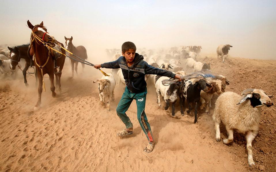 Η απόδραση. Την διέξοδο έδωσαν οι συμμαχικές δυνάμεις με τις -μέχρι τώρα- νικηφόρες επιχειρήσεις τους στην Μοσούλη, στον νεαρό βοσκό. Έτσι, όταν δόθηκε η ευκαιρία, το αγόρι μαζί με τα άλογα και τα πρόβατα της οικογένειας, έτρεξε προς την σωτηρία και μακριά από το χωριό Abu Jarboa.  REUTERS/Ahmed Jadallah