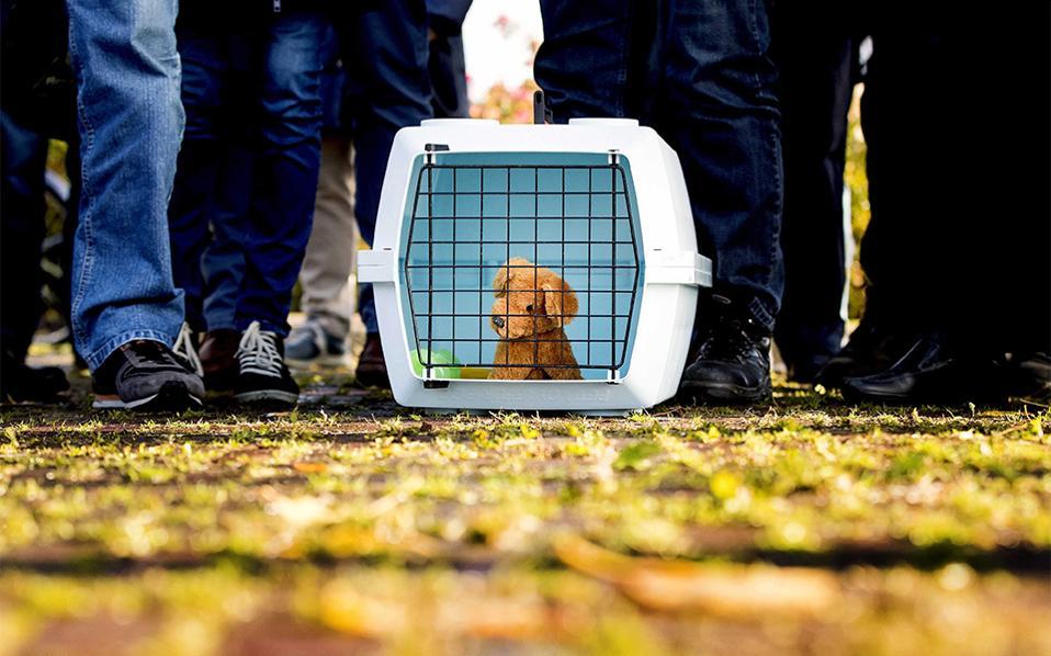 Ψεύτικος φόβος. Ξεκίνησε η εκκένωση του Marken  της Ολλανδίας με την συμμετοχή κατοίκων και ψεύτικων (και όχι μόνο) κατοικίδιων. Η άσκηση έχει σκοπό την εκπαίδευση για την ασφαλή εκκένωση 1.000 κατοίκων της πόλης   σε περίπτωση παραβίασης  των αναχωμάτων με ύδατα. EPA/KOEN VAN WEEL