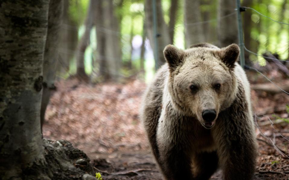 bear-thumb-large