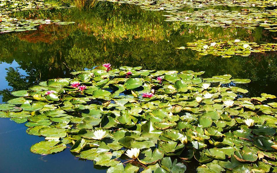O εμβληματικός κήπος με τα νούφαρα του Μονέ στο Ζιβερνί. (Φωτογραφία: ΔΗΜΗΤΡΗΣ ΤΣΟΥΜΠΛΕΚΑΣ)