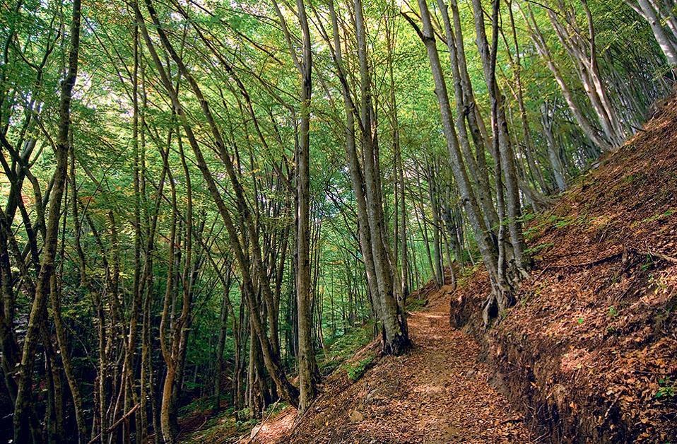 Το Παρθένο Δάσος του Φρακτού. (Φωτογραφία: ΚΛΑΙΡΗ ΜΟΥΣΤΑΦΕΛΛΟΥ)