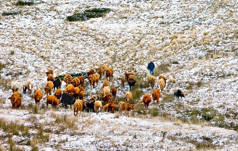 Αρκετοί ντόπιοι ασχολούνται με την κτηνοτροφία, αν και οι περισσότεροι καλλιεργούν τους κάμπους. (Φωτογραφία: ΚΛΑΙΡΗ ΜΟΥΣΤΑΦΕΛΛΟΥ)