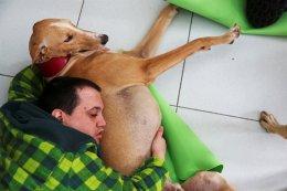 Η αγάπη ως θεραπεία. Η  Argi είναι ένας σκύλος που θεραπεύει ψυχές. Το greyhoud  επισκέπτεται το Benito Menni, κέντρο για ασθενείς με ψυχικές παθήσεις στην Ισπανία για να πάρει και να δώσει αγάπη, χαρίζοντας στα ταραγμένα μυαλά, λίγη πολύτιμη  γαλήνη.  REUTERS/Susana Vera