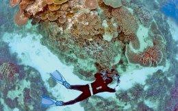 Κοράλλια του Μεγάλου Υφάλου με σημάδια λεύκανσης, συνέπεια της αύξησης της θερμοκρασίας των υδάτων.