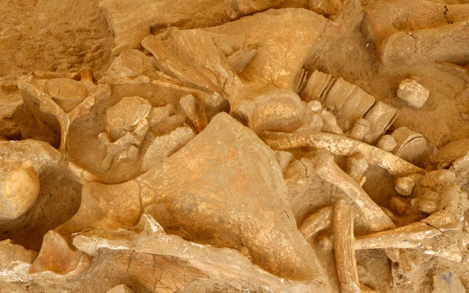 Υπολείμματα ενός μαλλιαρού μαμούθ, που οι αρχαιολόγοι ονόμασαν Χέλμουτ και το οποίο χρονολογείται πριν από 125 χιλιάδες έως 200 χιλιάδες χρόνια.