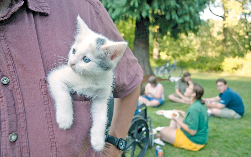Πολλές γάτες απολαμβάνουν την παρέα των ιδιοκτητών τους περισσότερο και από το φαγητό.