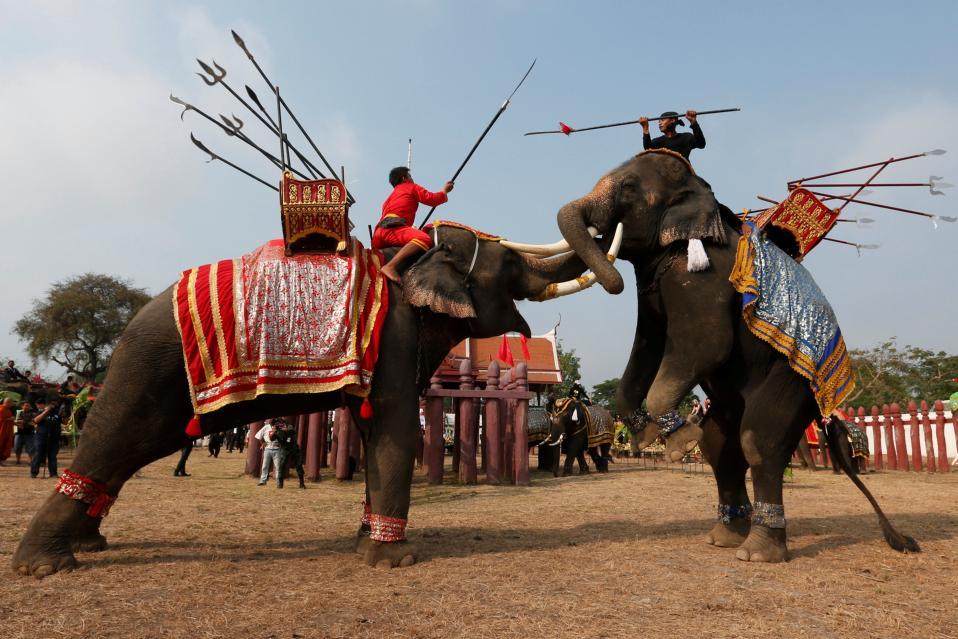 Καβγάς. Την εθνική ημέρα ελεφάντων γιορτάζουν με κάθε επισημότητα στην Ταϊλάνδη. Ιδιαίτερα δε στην αρχαία πόλη Ayuthaya η γιορτή περιλαμβάνει πλήθος εκδηλώσεων για ελέφαντες αλλά και  ανθρώπους. Οπως πάλη μεταξύ των τεραστίων ζώων, όπου οι αναβάτες απλά κάνουν πως συμμετέχουν.  REUTERS/Chaiwat Subprasom