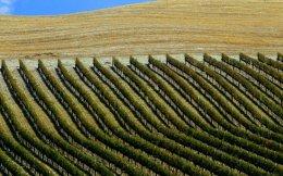 Η περιοχή της Τοσκάνης είναι γεμάτη αμπελώνες απ' όπου βγαίνουν μοναδικά κρασιά όπως τα Κιάντι και Μπρουνέλο.