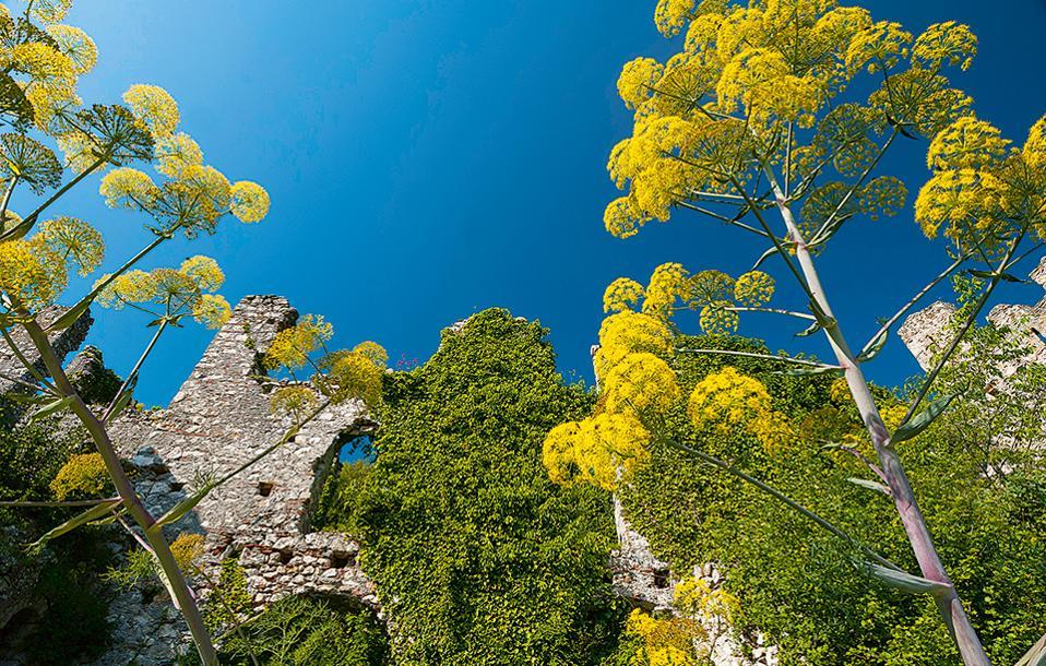 Η βόλτα στο ολάνθιστο κάστρο θα σας οδηγήσει σε ερείπια ναών και αρχοντικών σπιτιών. (Φωτογραφία: ΓΙΑΝΝΗΣ ΓΙΑΝΝΕΛΟΣ)
