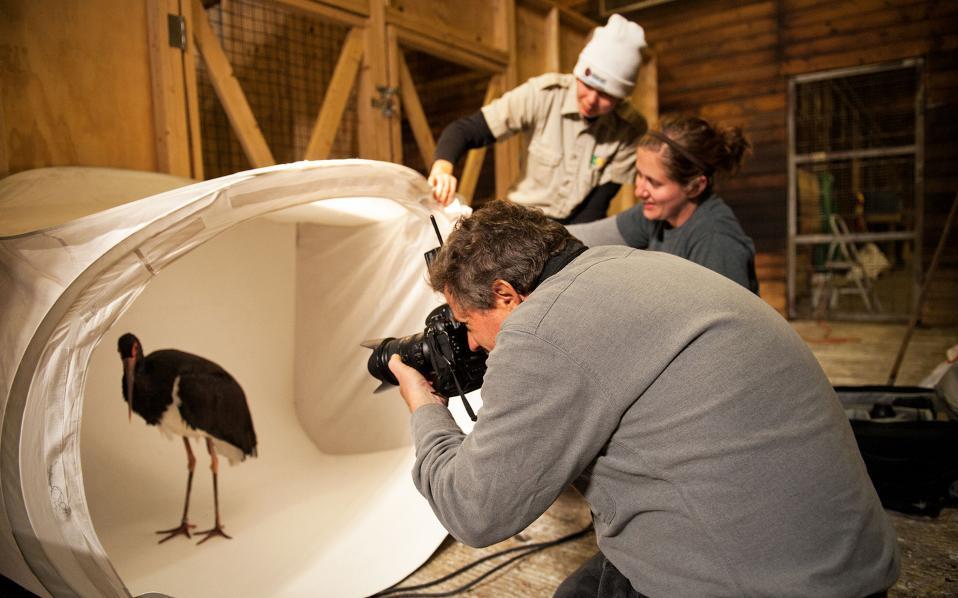 Eδώ και μία δεκαετία, ο Τζόλε Σαρτόρε έχει φωτογραφίσει σχεδόν 6.500 είδη. Ανάμεσά τους, 1.836 πτηνά, 894 θηλαστικά, 568 αμφίβια και 716 ψάρια.
