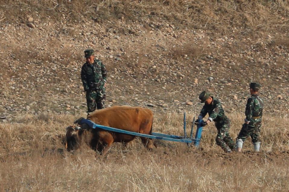 Εχουμε και πυρηνικά! Στην μια πλευρά του ποταμού Yalu της Βορείου Κορέας, στρατιώτες οργώνουν με την βοήθεια βοδιού. REUTERS/Aly Song