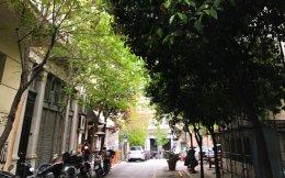 Οι νεραντζιές στην Ανθίμου Γαζή, επιτομή της Αθήνας.