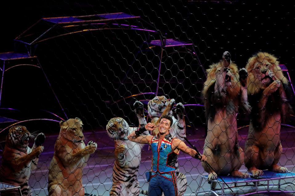 Εξευτελισμός. Τα δυνατά λιοντάρια, οι άρχοντες της άγριας ζωής, στα δυο τους πόδια νιαουρίζουν για το κοινό, ως αποτέλεσμα της εκπαίδευσης του εικονιζόμενου θηριοδαμαστή Alexander Lacey σε παράσταση στην Νέα Υόρκη. Το τσίρκο Ringling Bros. and Barnum & Bailey, εξακολουθεί να είναι από αυτά που χρησιμοποιούν ζώα για την διασκέδαση του κοινού, πρακτική που τα περισσότερα τσίρκο της Ευρώπης έχουν εγκαταλείψει.  REUTERS/Lucas Jackson