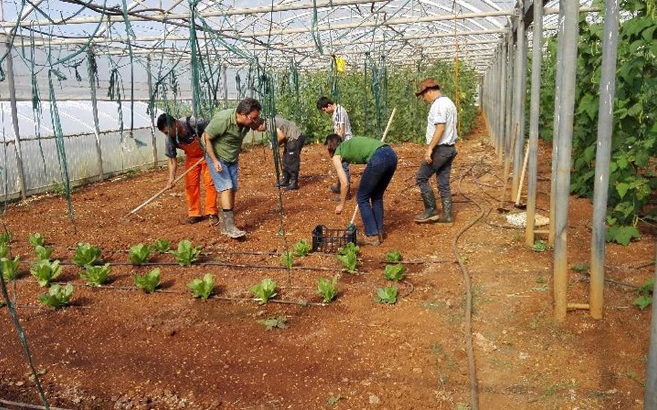 Το πρόγραμμα «Ο Κήπος της Λυσούς» δημιουργήθηκε από τη Γερμανίδα δημοσιογράφο Βαλτράουτ Σπέρλιχ και την Εύα-Μαρία Λανγκ. Τα προϊόντα που παράγουν τα διαθέτουν οι ίδιοι οι νέοι στην τοπική λαϊκή αγορά.