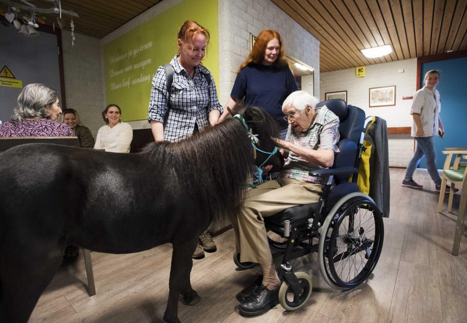Ζωντανή θεραπεία. Συνήθως είναι σκύλοι οι οποίοι επιφορτίζονται με τον βάρος του τίτλου «θεραπευτικό ζώο». Σε οδοντιατρεία βοηθούν αυτιστικά παιδιά, σε νοσοκομεία ασθενείς και σε γηροκομεία τους ηλικιωμένους να αποκτήσουν μια τρυφερή επαφή. Στην εικονιζόμενη περίπτωση από το Deventer στην Ολλανδία, τον ρόλο του θεραπευτή έχει ένα άλογο.  EPA/PIROSCHKA VAN DE WOUW