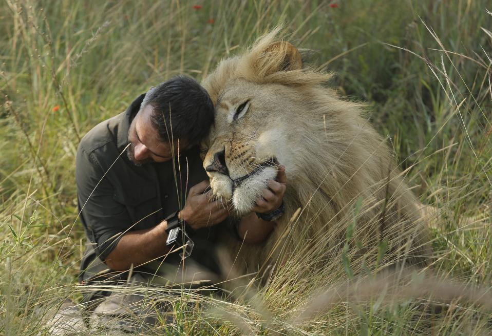 Φίλος με τα λιοντάρια. Αγνωστο πώς τα καταφέρνει ο Kevin Richardson να κρατά αγκαλιά και να χαϊδεύει άγρια λιοντάρια του  Dinokeng Game Reserve κοντά στην Πρετόρια. Οι περισσότεροι των αποκαλούν «γητευτή των λιονταριών» και ο ίδιος ισχυρίζεται ότι το κάνει μόνο και μόνο για να στρέψει τα φώτα της δημοσιότητας στα υπέροχα ζώα των οποίων ο πληθυσμός  μειώνεται συνεχώς. (AP Photo/Denis Farrell)