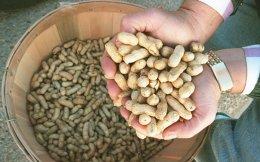 Οι ξηροί καρποί είναι από τις τροφές που θωρακίζουν τις γυναίκες από την πρόωρη εμμηνόπαυση.