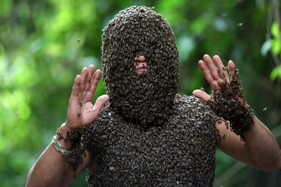 Αναζητώντας την βασίλισσα. O Bui Duy Nhat από το Βιετνάμ άρχισε να ασχολείται με τις μέλισσες το 1993. Είναι μάλιστα από τους ελάχιστους στην χώρα του που μπορεί να τις προσελκύσει, σε διάστημα 20 λεπτών, χωρίς μάλιστα να φορά κάποιο προστατευτικό εξοπλισμό παρά ωτοασπίδες. Το μυστικό του; κρύβει την βασίλισσα πάνω του.  EPA/PHAM NGOC THANH