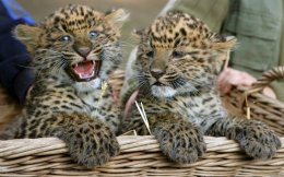 leos1