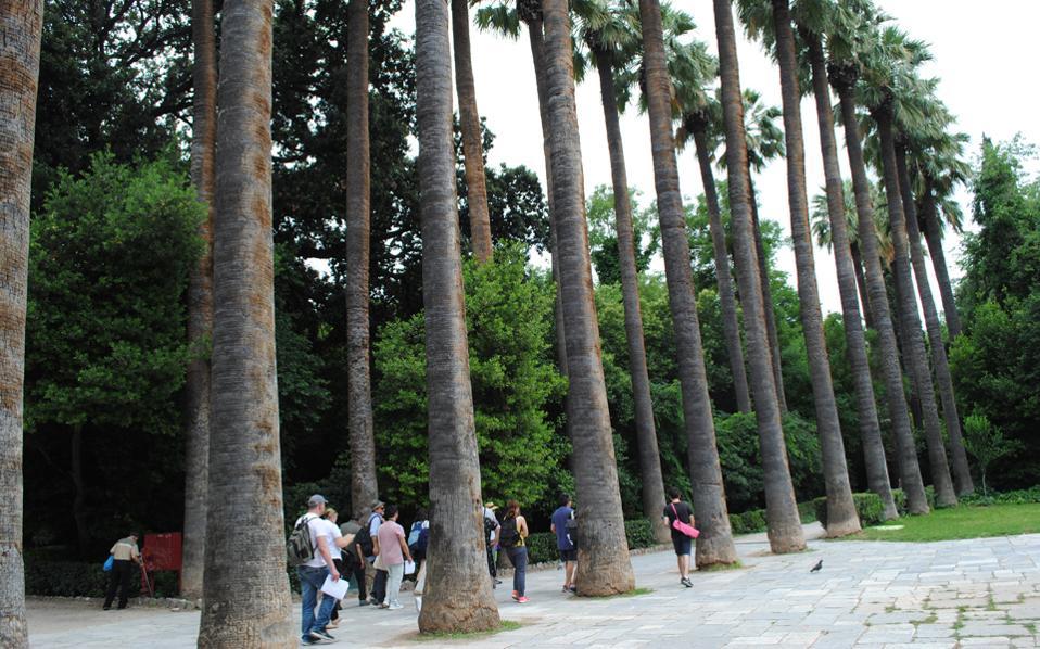 Η δεντροστοιχία με τις Ουασινγκτόνιες. Οι φοίνικες με τα παλαμοειδή φύλλα που, το 1842, φύτεψε η Αμαλία. Εκεί ξεκινάει η παράσταση του Θ. Γκόνη.