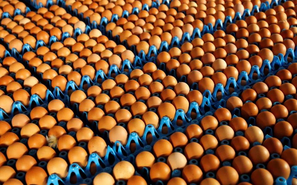 eggs3948e